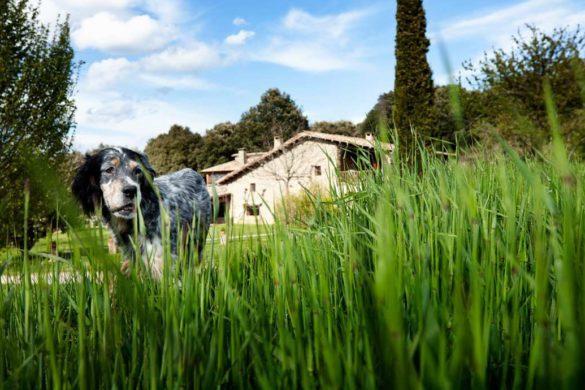 Admitir mascotas en tu casa rural, ¿sí o no?