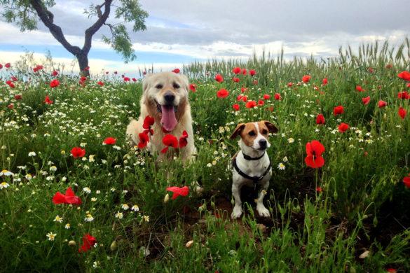¿Cobrar por las mascotas en tu casa rural?