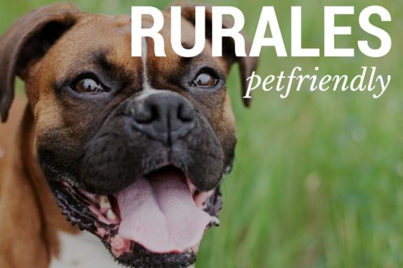 7 casas rurales Pet Friendly. ¡No los dejes en casa!
