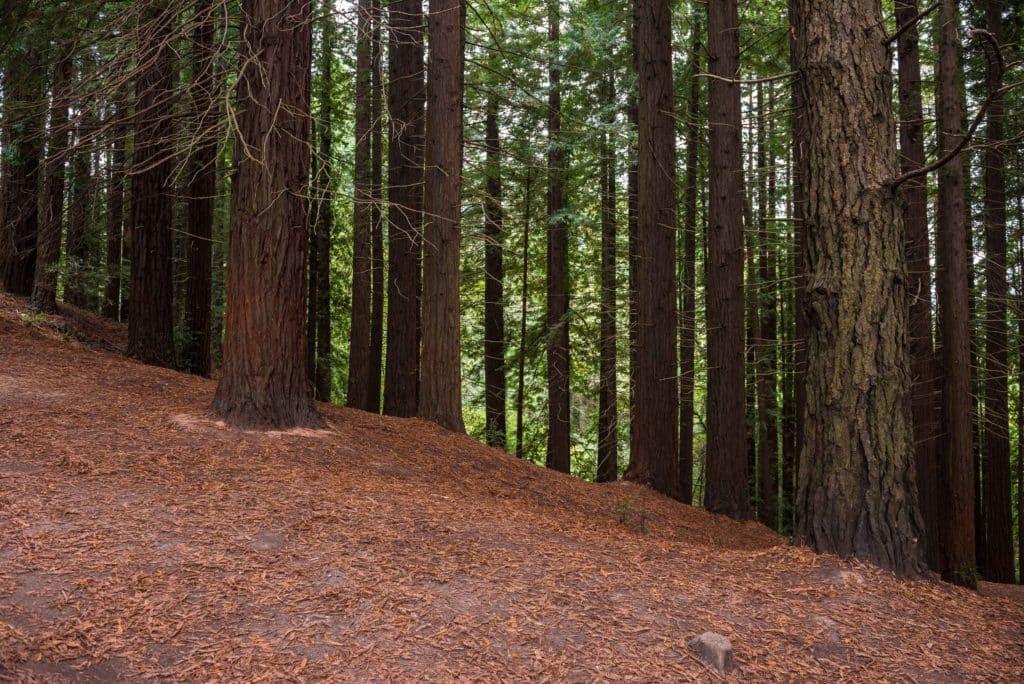 Bosque de Secuoyas de Cantabria