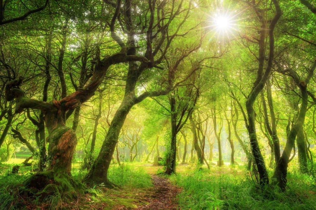 bosque laurisilva Madeira