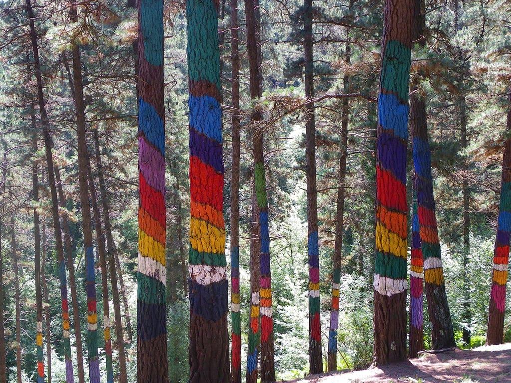 Bosque de Oma