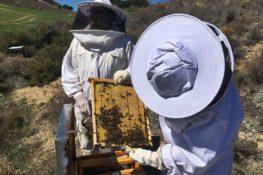 La miel, el secreto más dulce de Cuenca