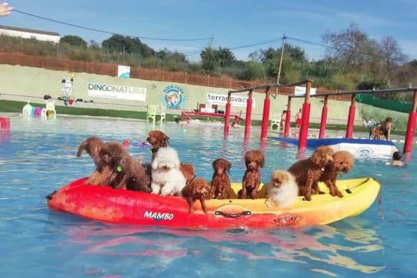 El sueño cumplido de un perro: un parque acuático y piscinas solo para ellos