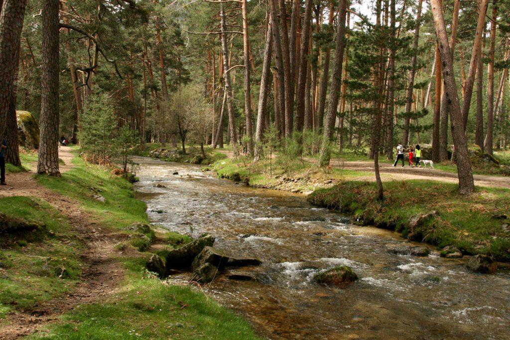 Bosques de Valsaín
