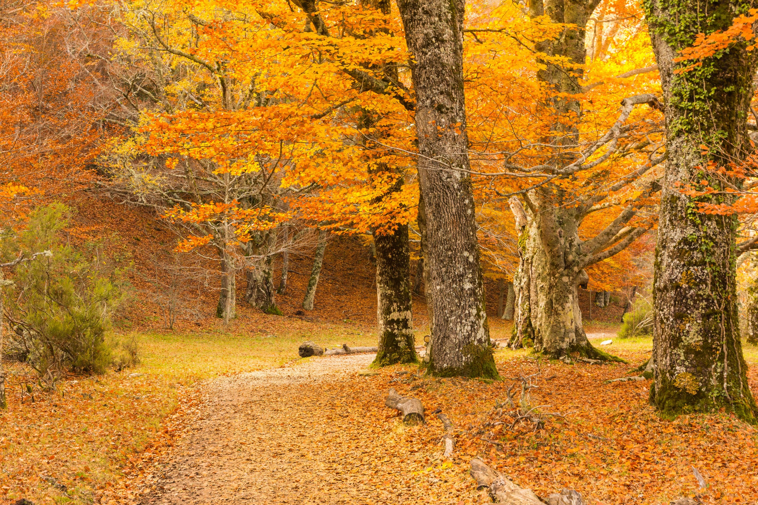 Hayedo de Montejo, bosques otoño