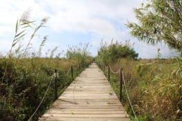 Delta del Llobregat, paraíso natural al lado de Barcelona