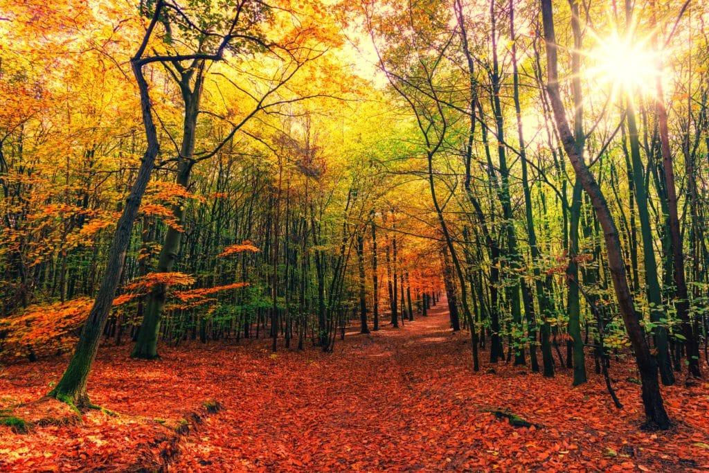 autumn, away, leaves