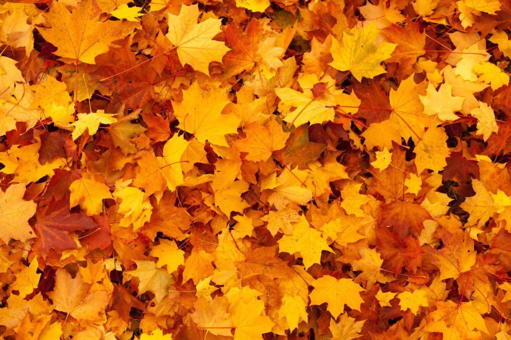 autumn, background, color