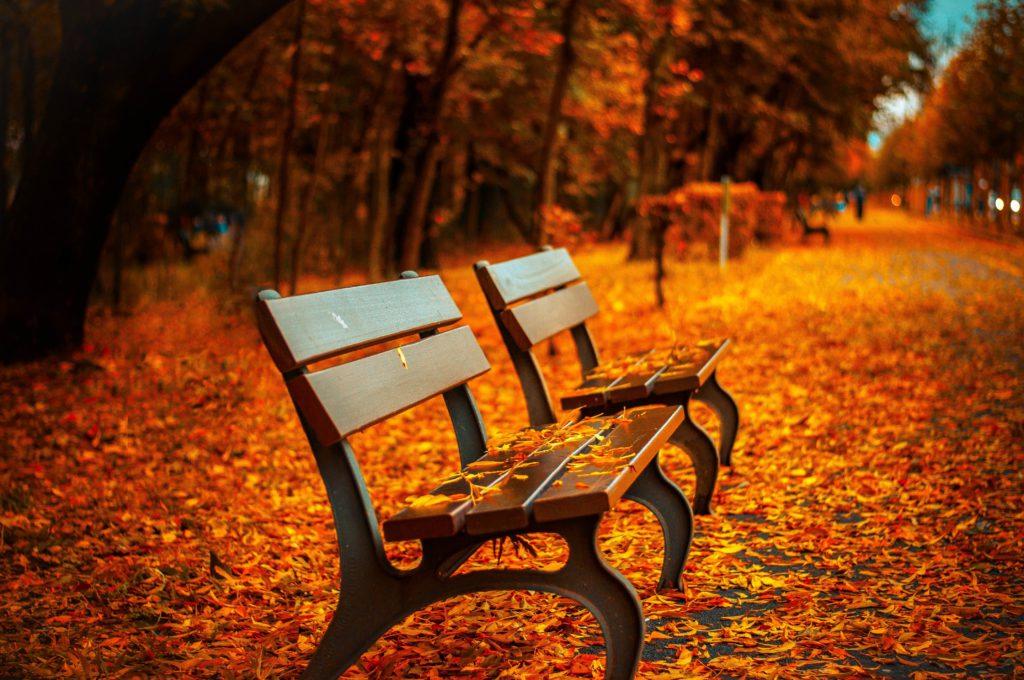 bench, fall, park