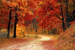 Un poema y diez citas de otoño