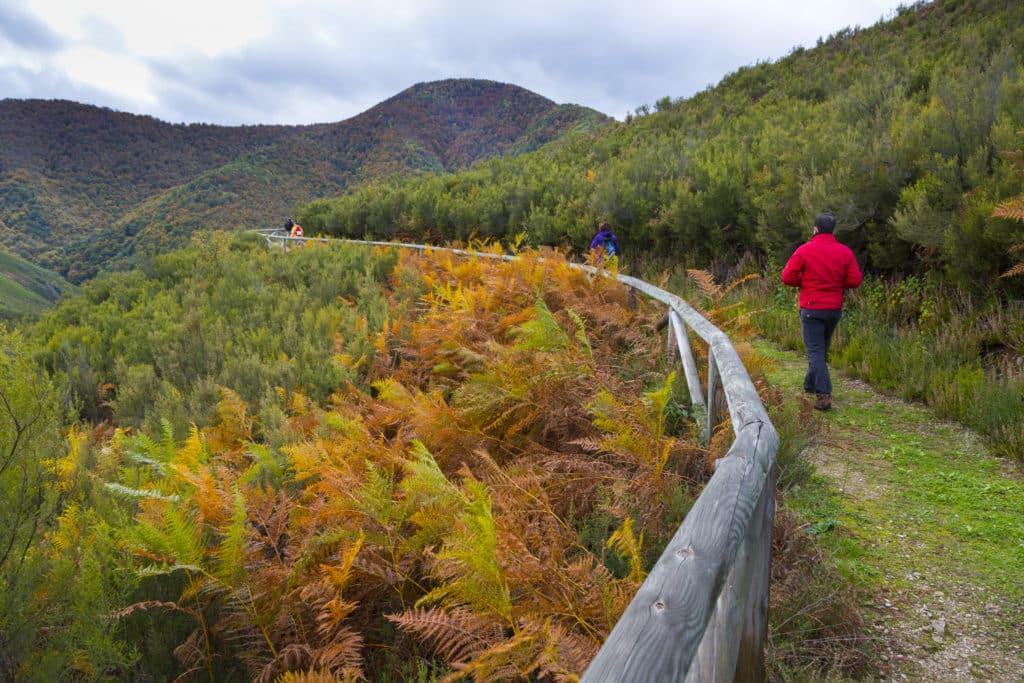 Muniellos Nature Reserve, Fuentes del Narcea, Degaña e Ibias Natural Park, Asturias, Spain, Europe
