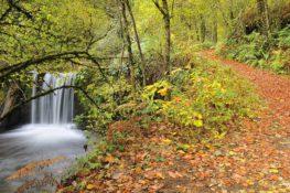 8 bosques otoñales donde podrían vivir elfos