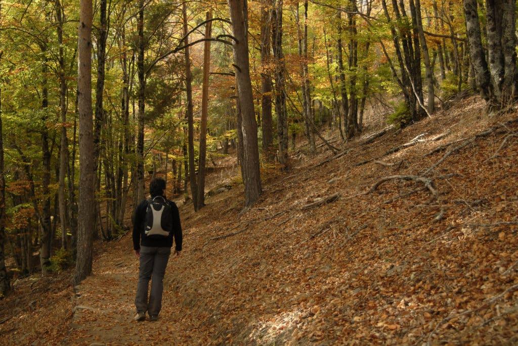 Bosque de La Tejera Negra en Otoño
