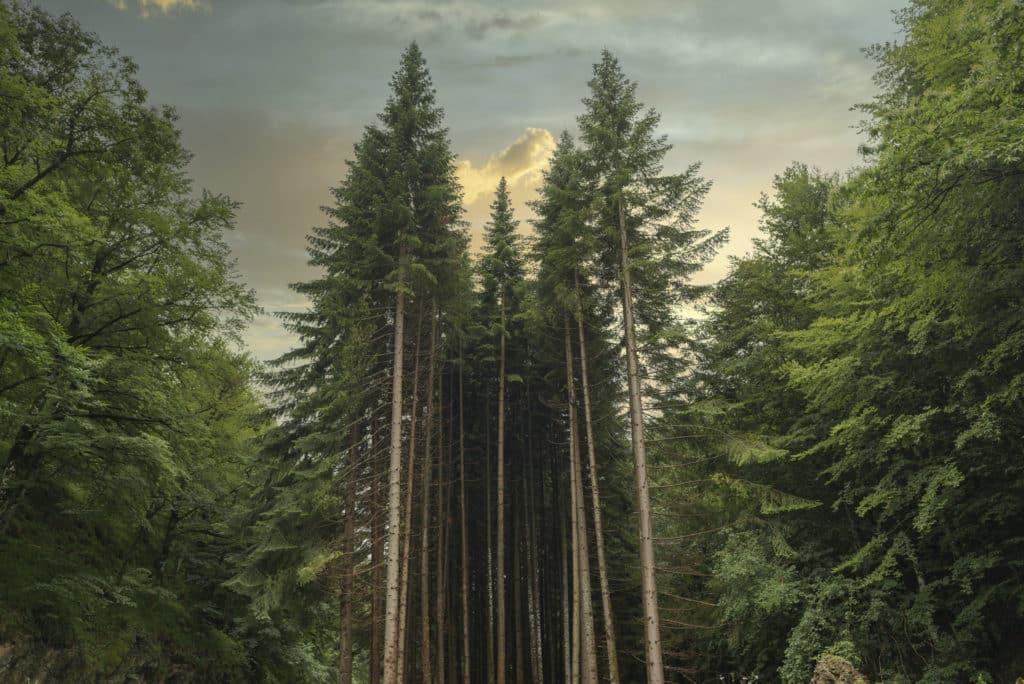 Forest in Irati jungle in Navarra, Spain