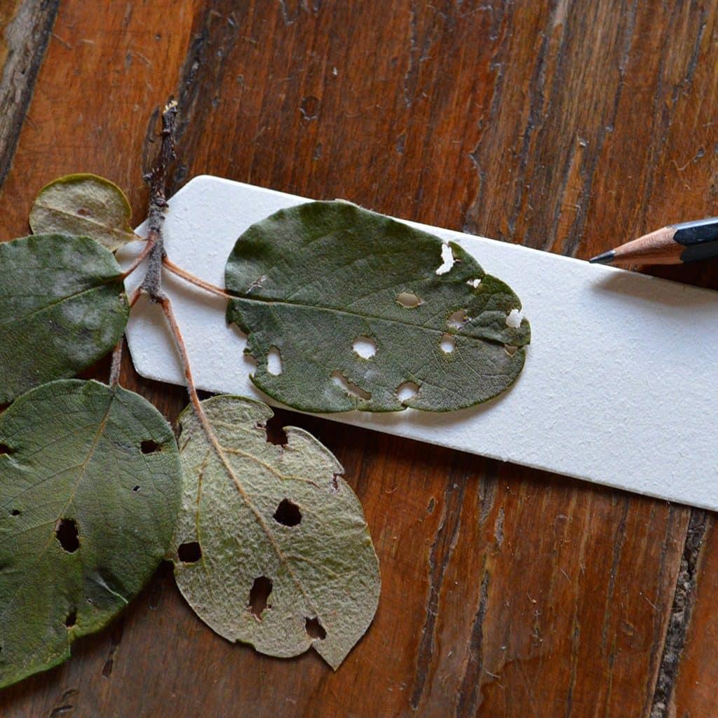 Juan Zamora, música con las hojas de los árboles