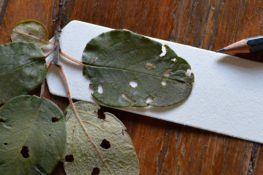 El artista que compone música con las hojas de los árboles
