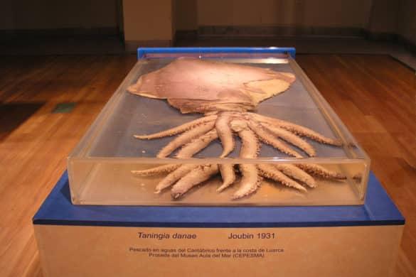 Asturias, la costa de los calamares gigantes