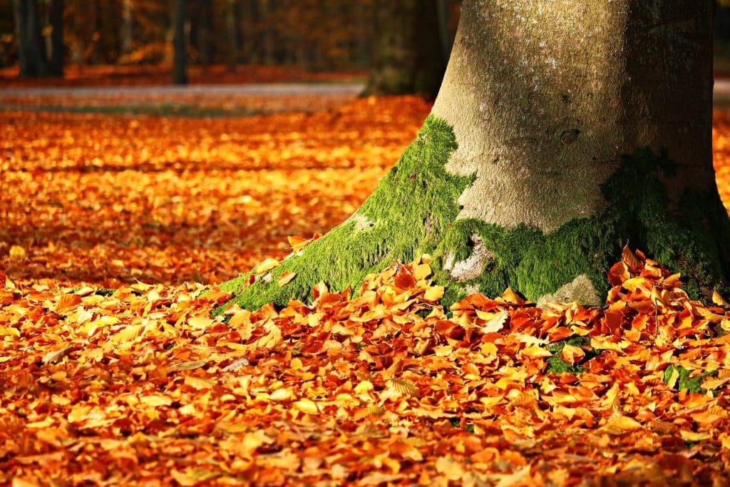 fall foliage, moss, tree