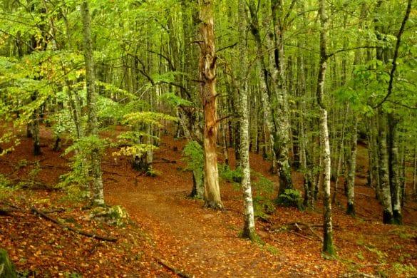 Al encuentro de Basajaun, señor tímido de los bosques