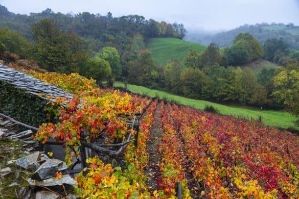 Más allá de la sidra: en Asturias también se produce vino