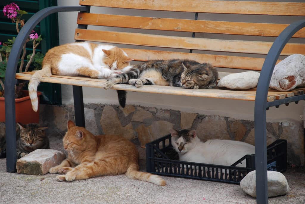 Colonias de gatos