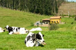 6 casas rurales donde convertirse en granjeros por un día