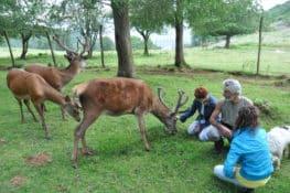 Agroturismo Pagorriaga, la casa de los ciervos