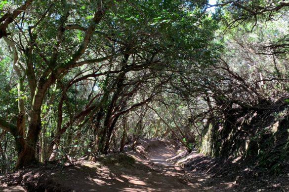 Ruta de los sentidos del Parque Rural de Anaga
