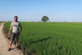 Así trabaja un arrocero en el delta del Ebro, antes de que se hunda