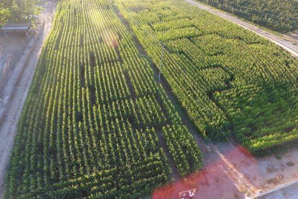 Laberintos vegetales de España: pasillos verdes que aceleran el pulso