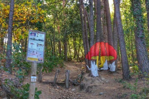Ruta por el bosque pintado de Poblet