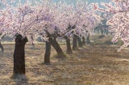 9 lugares para amar la floración en primavera
