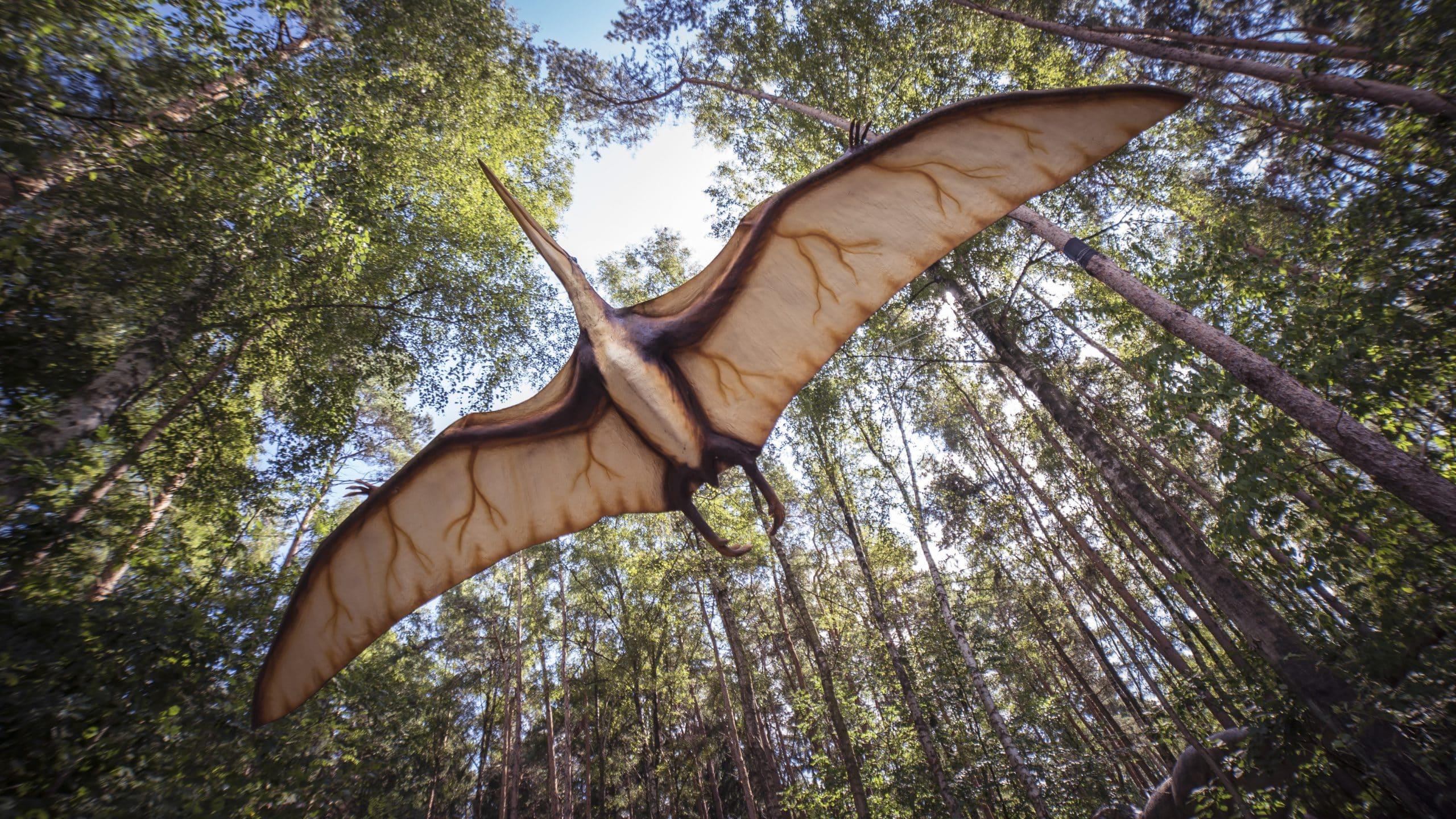 pterosaur, reptile, extinct