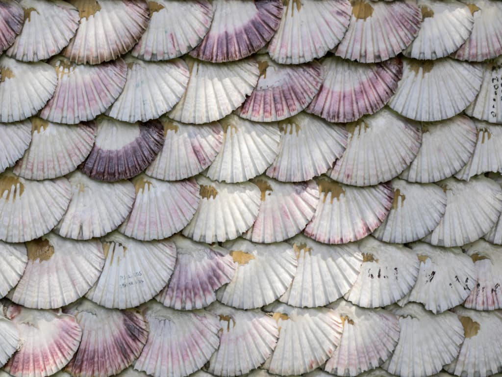 texture detail of  facade chapel covered of scallop shells on Toja Island, Galicia, Spain.